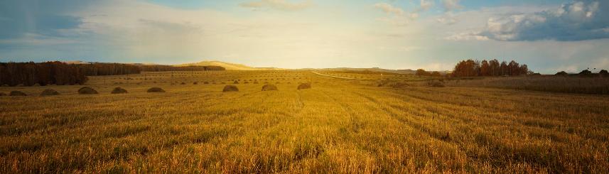 Zdjęcie przedstawia pole rolne
